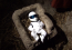 Аватар пользователя THE_STiG